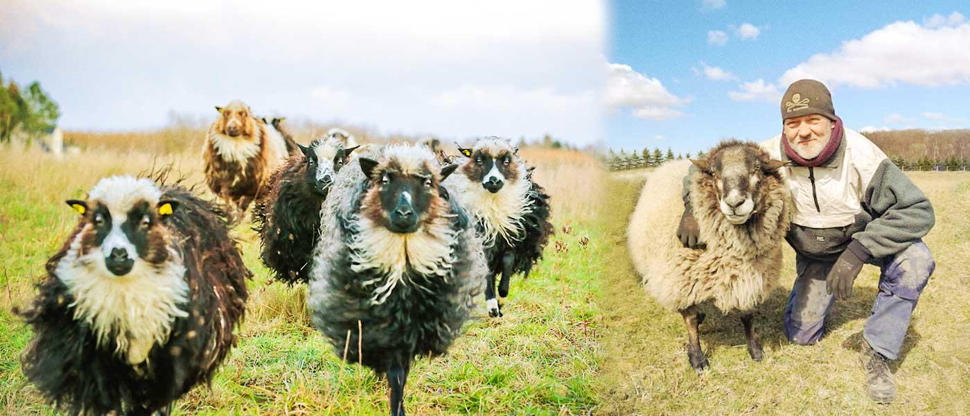 Staaland - Elmegaardens fire dyr